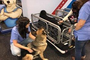 Abrió en España un gimnasio canino
